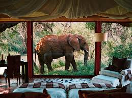 best 25 south africa safari ideas on pinterest travel south