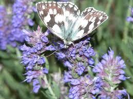 canap駸 tissus haut de gamme insectes et fleurs printemps été