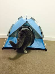 tiny tents for cats tents and cat