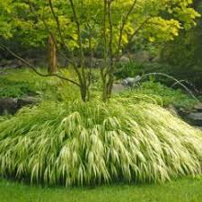 ornamental grasses from stark bro s ornamental grasses for sale