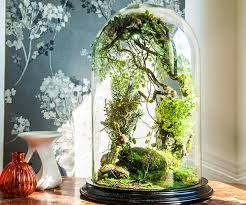 terrarium plants be equipped tabletop terrarium be equipped