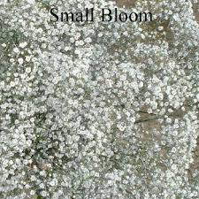 baby s breath flower glitter airbrushed baby s breath