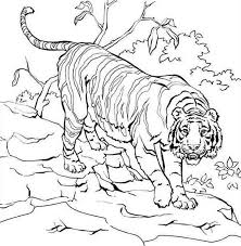 Free Coloring Pages Of Tiger In Its Habitat 9201 Bestofcoloring Com Coloring Pages Tiger