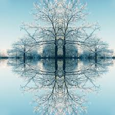 frosty trees by piera catalano digital photographer