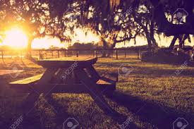 Sunrise Sunset Table Wooden Picnic Table In Field With Trees At Sunset Sunrise Golden