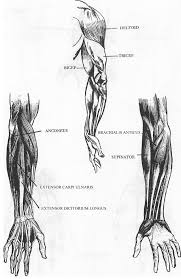 drawing human arms and hands how to draw the arms and hands with