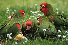 Parrot Decorations Home How To Attract Parrots Attracting Backyard Parrots