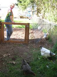 this amazing diy chicken run is what your backyard needs u2014 types