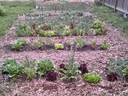 using leaves for mulching my vegetable garden youtube