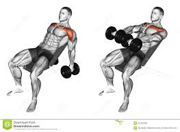 exercising lifting arms with dumbbells on incline bench stock