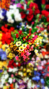 flower garden wallpaper back u2013 best wallpaper download