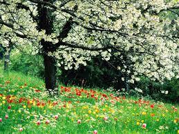 download free spring flowers backgrounds u2013 wallpapercraft