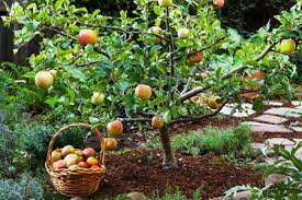 Backyard Fruit Trees Try This Simple Innovative Way To Keep Fruit Trees At People