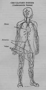 Online Human Body Herenow4u Net Books Online Preksha Dhyana Human Body Part I