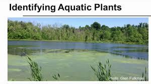 native aquatic plants uk identifying aquatic plants youtube