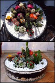 best 25 mini cactus garden ideas on pinterest mini cactus