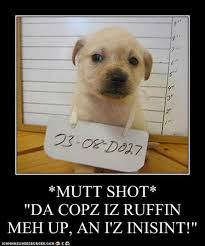 Law Dog Meme - mutt shot i has a hotdog dog pictures funny pictures of dogs
