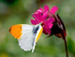 la lezione della farfalla u2013