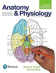 Human Anatomy And Physiology Marieb 7th Edition Human Anatomy And Physiology 9780805359107 Medicine U0026 Health