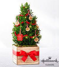miniature tree ftd flowers roses plants and gift baskets