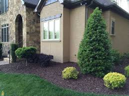 Oakland Landscape Supply by Buy Oak Leaf Holly Trees The Planting Tree