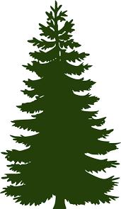 free vector graphic pine tree flora free image on