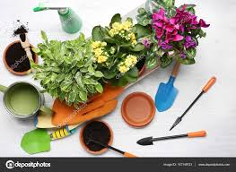 Beautiful Plants by Beautiful Plants On Table U2014 Stock Photo Belchonock 147148733