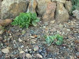 About Rock Garden by Garden Design Garden Design With Rock Garden Plant Selection With