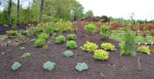 Landscaping Ideas For The Backyard Backyard Landscape Design Ideas What Plants To Use Where