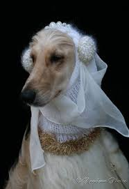 afghan hound jackets 17 best images about phoebe daughter on pinterest dog show