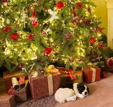 5 best christmas tree stands nov 2017 bestreviews