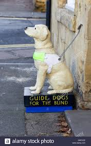 guide dog harness guide dog harness stock photos u0026 guide dog harness stock images
