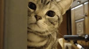 anime cute cat gif gifs show more gifs
