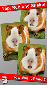 Shaved Guinea Pig Meme - angry guinea pig free android apps on google play