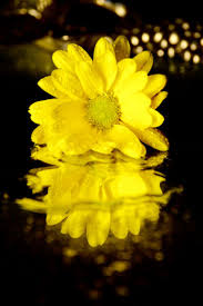 Color Yellow 59 Best Black And Yellow Images On Pinterest