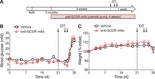 blockade of glucagon signaling prevents or reverses diabetes onset