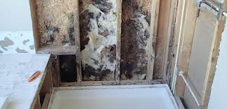 Mold Growing In Bathroom Bathroom Mold Growth Identification U0026 Removal Environix