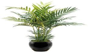 emejing indoor palm trees for sale contemporary interior design