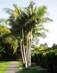 common landscaping plants palm modern common landscaping plants