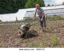 a gardener working in a walled garden in a country house stock