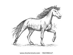 white horse stomping hoof pencil sketch stock vector 486583573