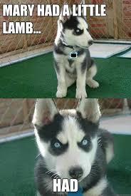 Cool Dog Meme - 117 best notorious thugs images on pinterest funny stuff ha ha