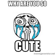 Why You So Meme - why are you so cute crying meme generator