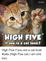 Cat Lover Meme - high five if you re a cat lover high five if you are a cat lover
