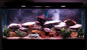 55 gallon aquarium light for sale 55 gallon fish tank 135 st petersburg fl pickup
