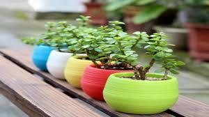 plastic pots for plants cuttings seedlings 4 inch standard size 20