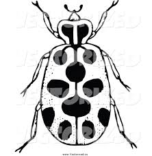 royalty free clipart of a black and white spotted beetle by prawny