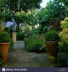 clipped box in large terracotta pots on paving in lush green