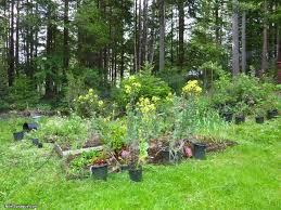 overgrown garden nilestyle com
