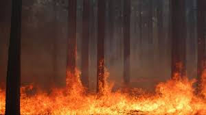 Wildfire Definition by Forest Fire Flames Tree Disaster Apocalyptic 1 Wallpaper